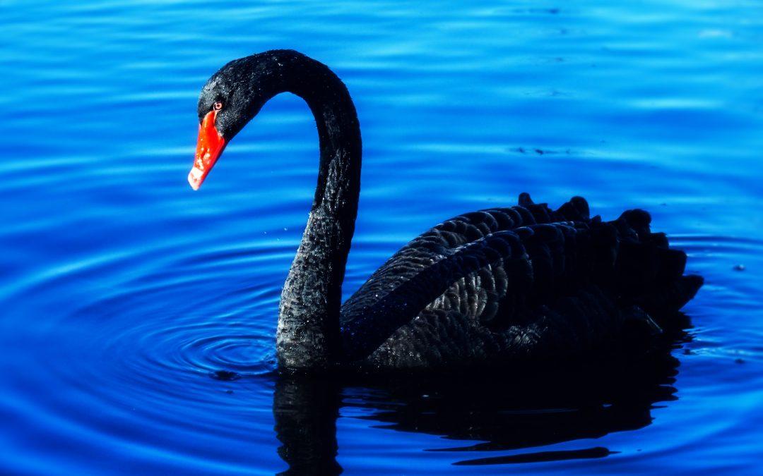 El Covid-19, el cisne negro del siglo XXI
